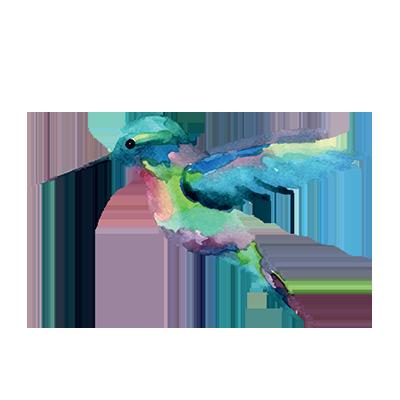 Kolibri-groen-400-vrij